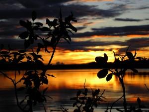 Ranuanjärvi, aamururkoa